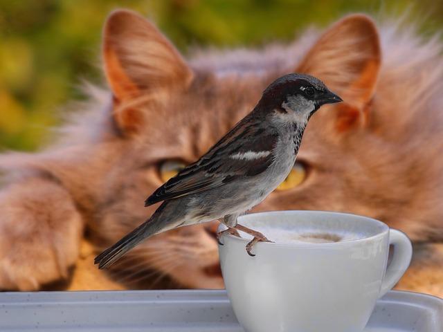 sparrow-2615761_640